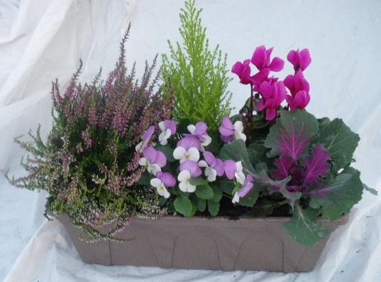 Les serres de timborne page 5 - Plantes fleuries d automne ...